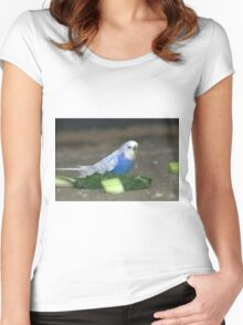 white wing blue budgie Women's Fitted Scoop T-Shirt