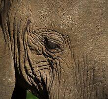 A majestic elephant by Sue Hawken