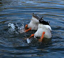 A pair of bums by Sharon Perrett