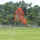flame tree by footyman