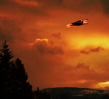 Soaring High Sunset by Gregory Ewanowich