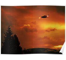Soaring High Sunset Poster