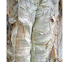 paper bark Photographic Print
