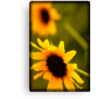 Breezy Day - Sunflowers Canvas Print