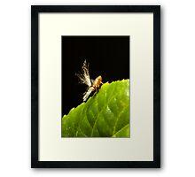 Passionvine Hopper Framed Print
