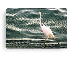 Afternoon wade Canvas Print