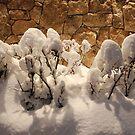 my winter by LenaMay
