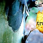truth in nature by SherryAnn