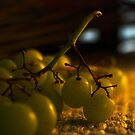 Grapes by jaker5000