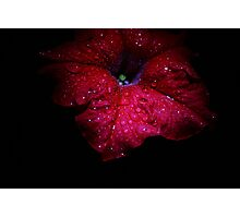 Blooms from the Dark of Night - 7 Photographic Print