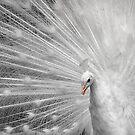 White Princess by Bobby McLeod