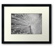 White Princess Framed Print