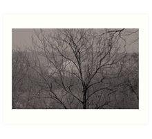 DC through the trees Art Print
