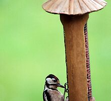 Thieving Woodpecker by EileenLangsley