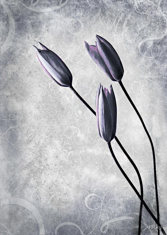 Tulips by Jacky