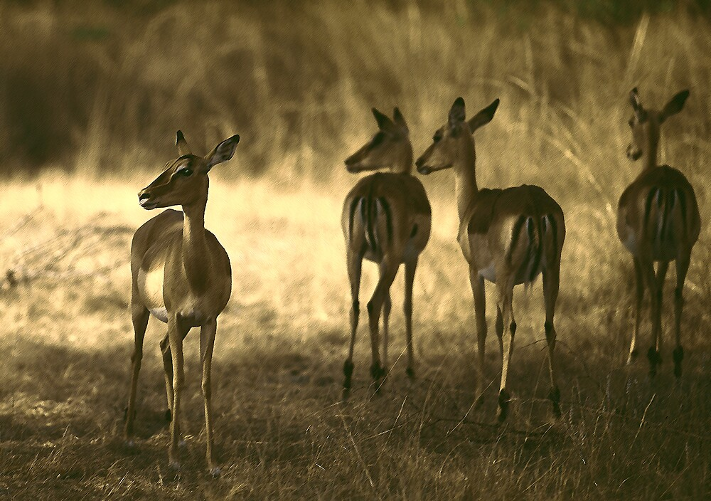 Oh Deer !! by Phillip  McCordall
