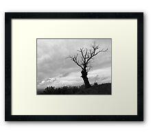 tree king Framed Print