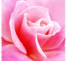 pink rose by Edith Krueger-Nye