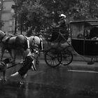 Poorin Rain 2 by Ori Kaydar