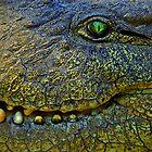 Crocodile Smile by Caroline Bland