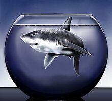 Shark Bowl by davidburles