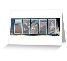 Seagulls at Sandgate series 5 Greeting Card