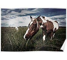 Ash Island Horse 2 Poster