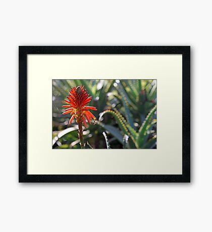 Aloe and Bee Framed Print