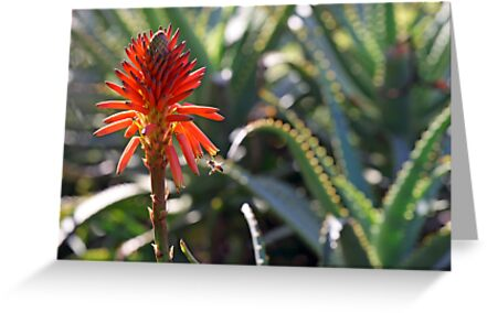 Aloe and Bee by Lucy Hollis
