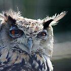 Eagle Owl by Ladymoose