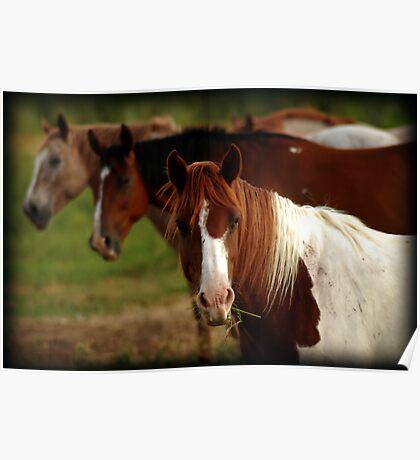 Tic-Tac-Toe Horses Poster
