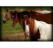Tic-Tac-Toe Horses Photographic Print