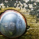 Rusty and Rustic by msflip