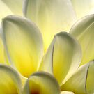 Flower by Sharon Ulrich