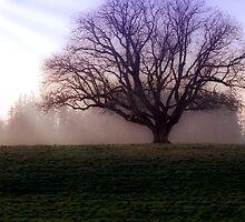 The Oak by Deri Dority