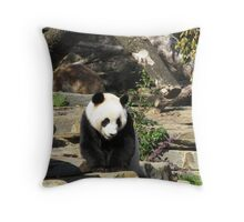 Giant Panda, Adelaide Zoo. C.B.D. South Australia. Throw Pillow