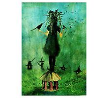 The Birds Cage Photographic Print