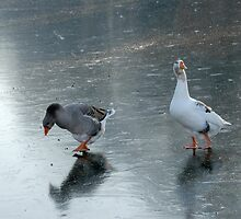 A Winter's Tale in Four Shots - 3 by jensNP