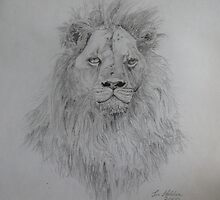 A lion in pencil by timmotholden