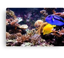 Tropical Fish on the Reef Canvas Print