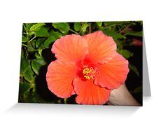 Pretty Flower ( Greeting Card