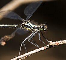 Dragonfly by Colin  Ewington