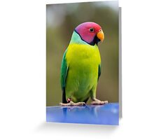 SLY the Plum Faced Parrot Greeting Card