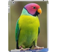SLY the Plum Faced Parrot iPad Case/Skin