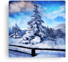 My beautiful fir tree Canvas Print