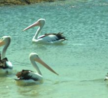 Pelicans by the shore  Sticker
