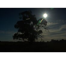 Silhouetted tree Photographic Print