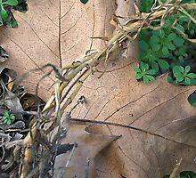 Fallen autumn leaf by ndarby1