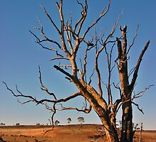 Drought by Leigh Jardine
