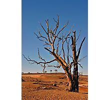 Drought Photographic Print